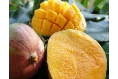 Les Givrées Mangue